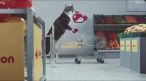 Koty na zakupach