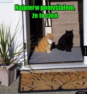 Rudy i czarny koteł