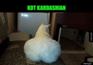 Modny koteł