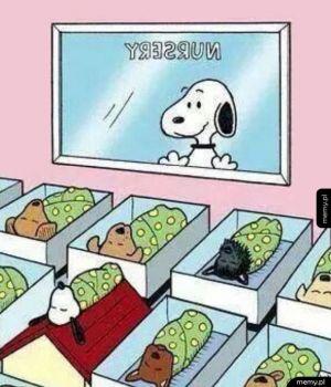 Synek Snoopy'ego