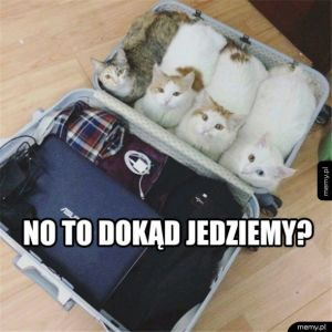Jedziemy na wycieczkę, bierzemy koty w teczkę