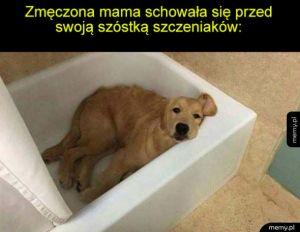 Zmęczona mama pieseł