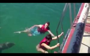 Pomocny delfin