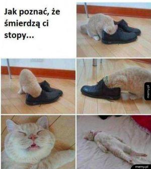 Kup sobie kota