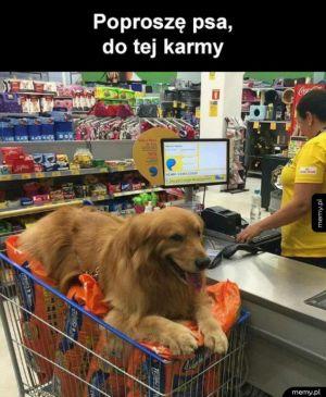 Proszę tego psa