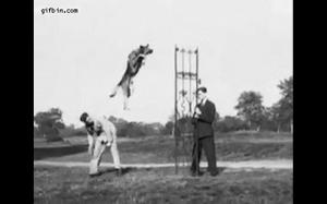 Owczarek niemiecki skacze przez płot