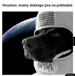 Pies w kosmosie
