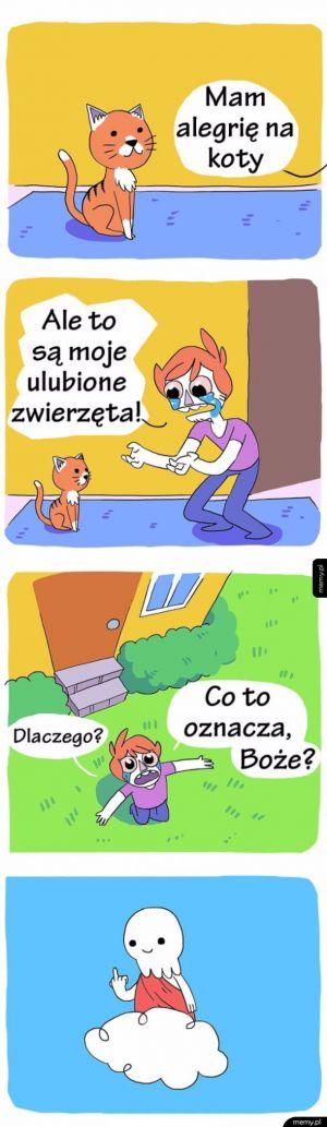 Alergia na koty