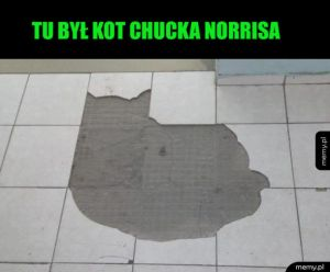 Kot Chucka Norrisa