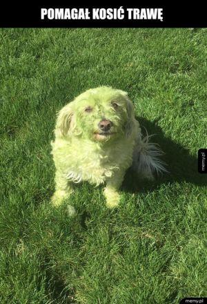 Zielony pieseł
