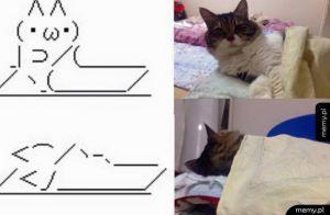 Dziwny koteł xD