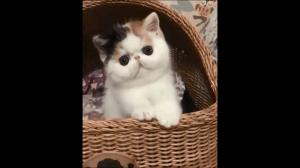 Kociak wpatruje się w twoją duszę