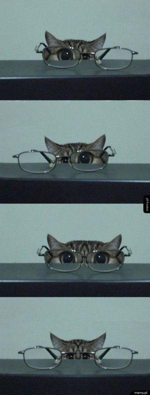 O.o o.O O.O o.o - kotek w okularach