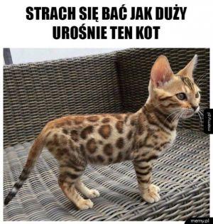 Adoptowałem Leoparda