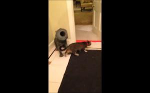 Kot vs złowieszcza czerwona taśma