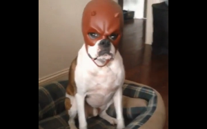 Wygląda na wkurzonego