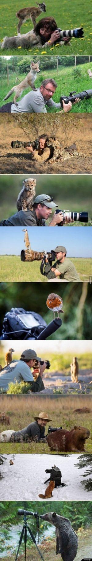 Kiedy jesteś kiepskim fotografem, ale zwierzęta chcą ci pomóc.