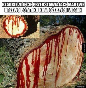 Biedne drzewo