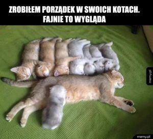 Piękne koteły