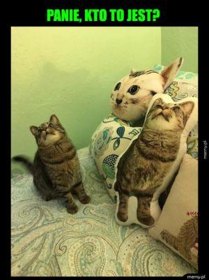 Zdziwiony koteł