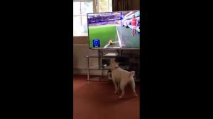 """""""Gdzie ta piłka?"""""""