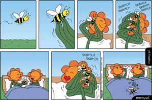 Pszczoły od lat są wykorzystywane