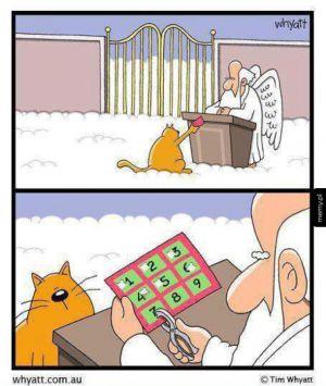 Kot i niebo