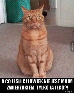 Koteł rozkminia