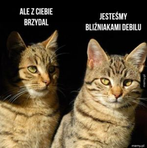 Kocie bliźniaki