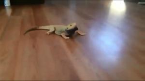 Jaszczur