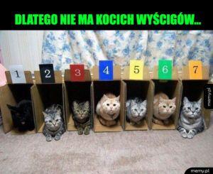 Wyścigi kotów