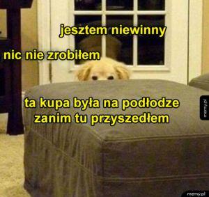 Niewinny pies