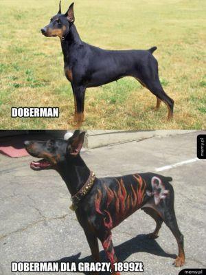 Doberman dla graczy
