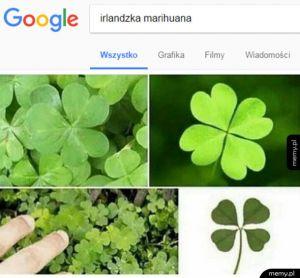 Irlandzka marihuana