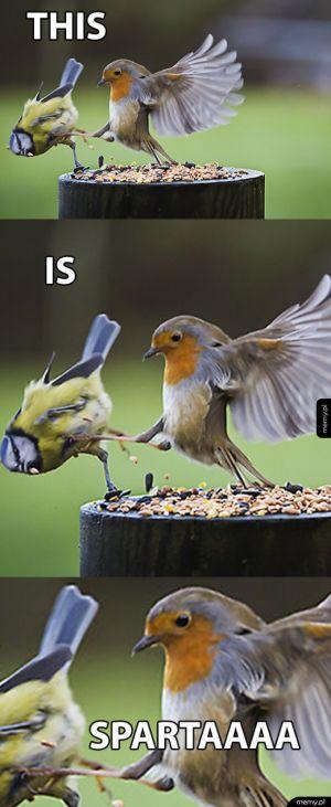 Nie zadzieraj z ptakiem