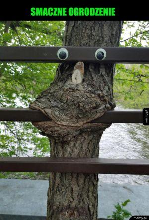Głodne drzewo
