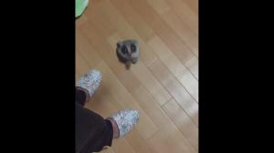 Lemur rakieta