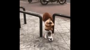 Psie ubranie