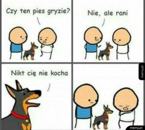 Pies który rani