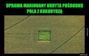 Ukryta marihuana