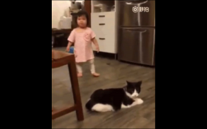 Złośliwy kotek
