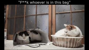 Urocze kotki