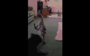 Wkurzone emu