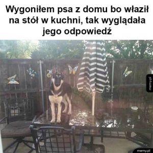 Niepokorny pies