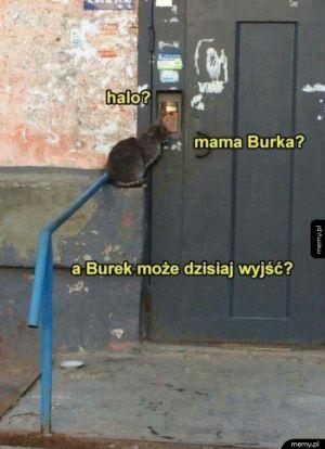 A Burek może dzisiaj wyjść?