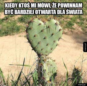 Jestem jak kaktus