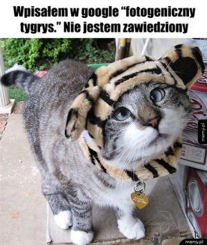 Fotogeniczny tygrys
