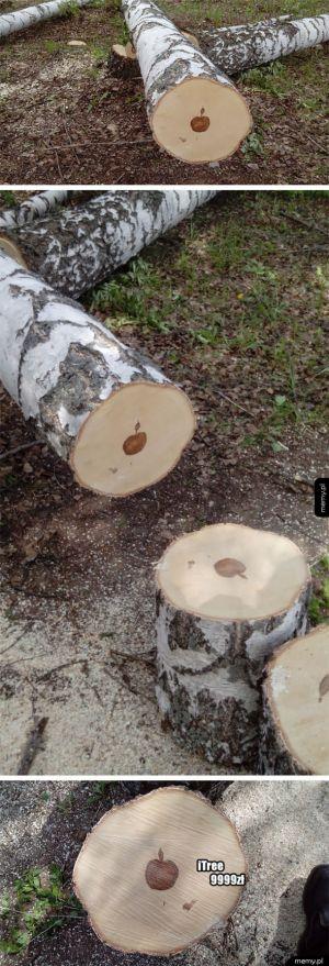 Znak apple znaleziony w drzewie