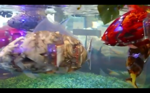 Robo rybki