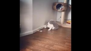 Brutalna walka kotów